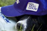 Dog Chow Disc Cup 4.jpg
