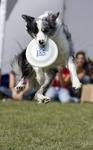 Dog Chow Disc Cup 5.jpg