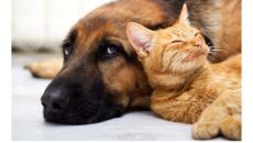 Pies-i-kot-t_sknota_zdj_cie-aran_acyjne-001-2014-07-12-_-00_39_04-80