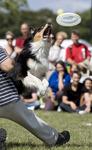 DOGFRISBEE  Uwaga na latające psy!