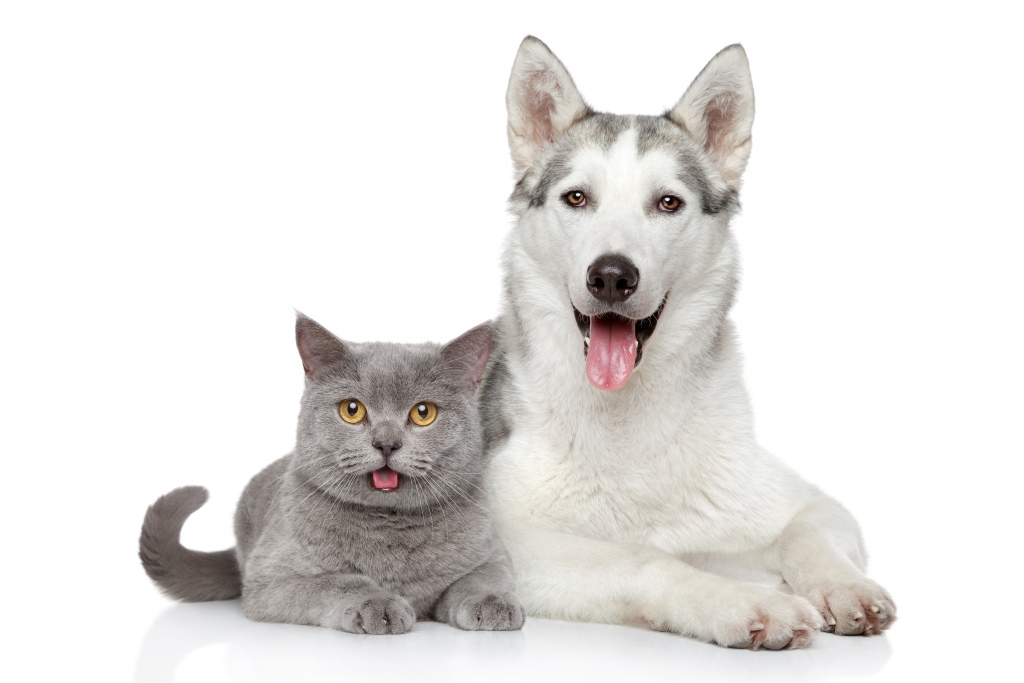 Pies i kot_zdj_cie aran_acyjne