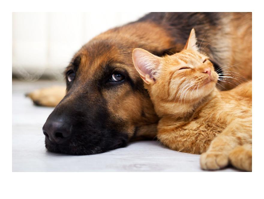 Pies i kot t_sknota_zdj_cie aran_acyjne-001-2014-07-12 _ 00_39_04-80
