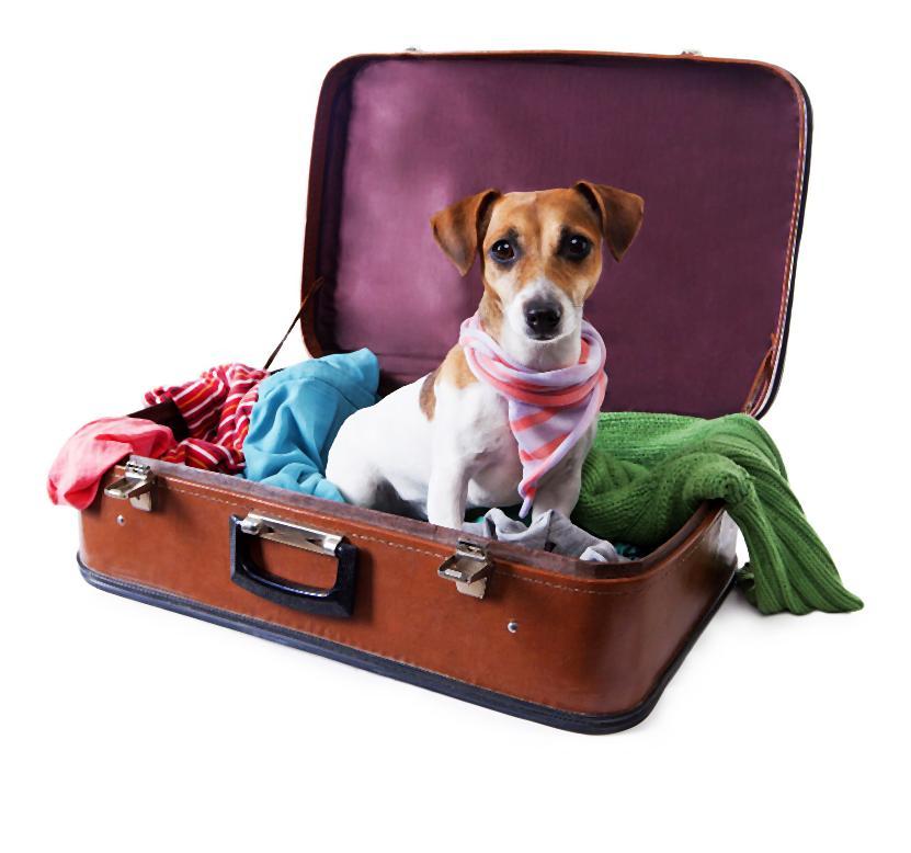Pies na walizkach_zdj_cie aran_acyjne-003-2014-07-12 _ 00_39_04-80