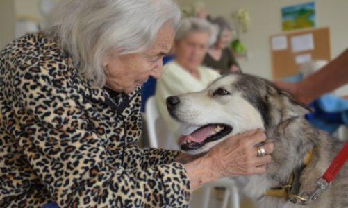 Pies w roli terapeuty – pomoc dla osób z chorobą Alzheimera