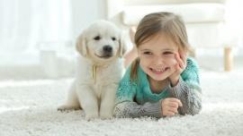 Jak przygotować psa na pojawienie się dziecka? Dom Przyjście na świat dziecka to najważniejszy moment w życiu rodziców. Dotychczas cały swój czas i uwagę poświęcali czworonogowi, teraz sytuacja znacznie się zmieni. Co zrobić, aby oszczędzić psu stresu związanego z nową sytuacją i przyzwyczaić go do obecności niemowlęcia?