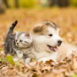 Jak dbać o zwierzaka jesienną porą?