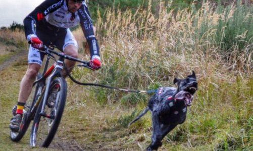 Bikejoring, czyli decydują siła w łapach i psychiczna więź
