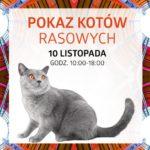 Pokaz Kotów Rasowych w Silesia City Center