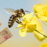 Pszczoły zagrożone wyginięciem! Co zrobić, by im pomóc?