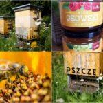Dzień Pszczół - Miejskie pasieki w CH Osowa na pomoc pszczołom