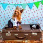Jak bezpiecznie i komfortowo podróżować samolotem z naszym zwierzakiem