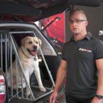 O psie, który jeździł… samochodem, czyli jak bezpiecznie przewozić czworonogi