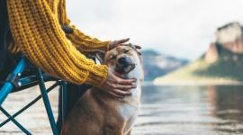 NAUKOWCY: ZMIANY SEZONOWOŚĆI PÓR ROKU TO POWAŻNE ZAGROŻENIE DLA ZDROWIA ZWIERZĄT LIFESTYLE, Zwierzęta - Zmiany w sezonowości pór roku z pewnością doprowadzą do zwiększenia zachorowalności na choroby u psów i kotów - twierdzą zgodnie eksperci kampanii społecznej Protect Our Future Too.
