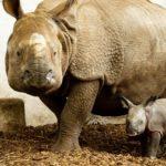Biznes w służbie nosorożcom